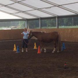 Praxis für Ergotherapie - Coaching am Pferd
